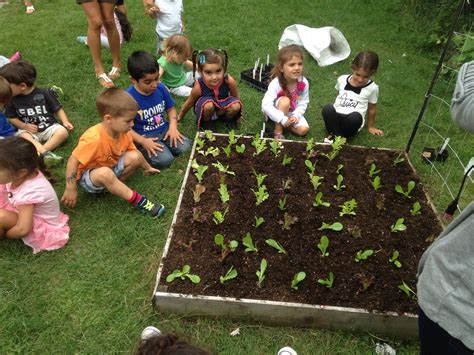 School Vegetable Gardens Urban Seedling School Vegetable Garden