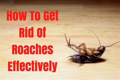 17 ways to get rid of roaches effectively