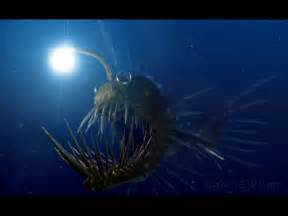 deep ocean creatures the one with the random interests