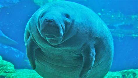 buy a boat put out or swim best manatee diving diversity diving scuba diving in