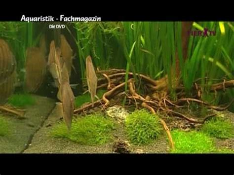 aquascape zeitschrift doku einrichtung malawi aquarium doovi