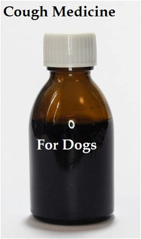 cough medicine for dogs a list of medicines for cough dogs health problems