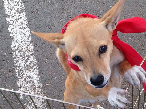 puppy adoption utah pet adoption weekend event draws crowd on day 1 continues st george news