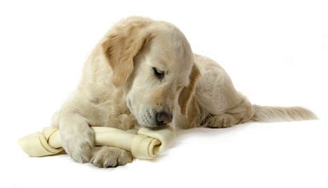 best chew bones for puppies top 7 best rawhide treats for dogs that chew a lot 2017