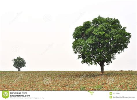 where to put a tree in a small room a small and big tree with new leaf growth royalty free