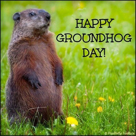 groundhog day no shadow meaning feb 2 is groundhog day all things animal