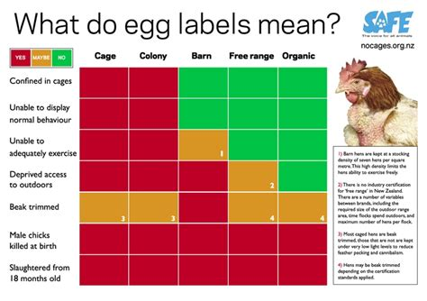 Really Free Find 1000 Images About Stop Factory Farming On What S The New Zealand And Hens
