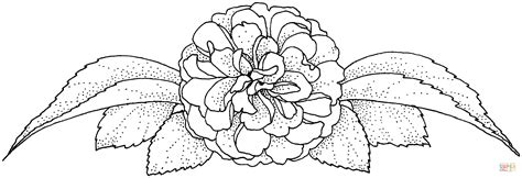 camellia flower coloring page camellia flower drawing car interior design