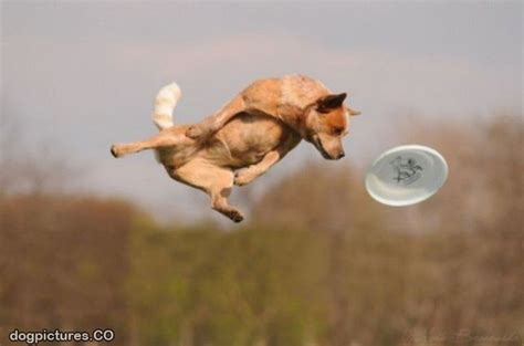 flying puppies high flying pictures