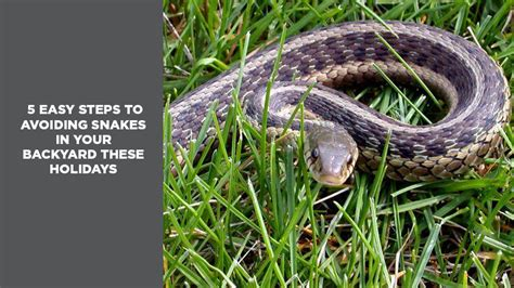 how to find snakes in your backyard 5 easy steps to avoiding snakes in your backyard these