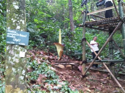 Lu Gantung Besar rute keliling kebun raya bogor yang tidak melelahkan