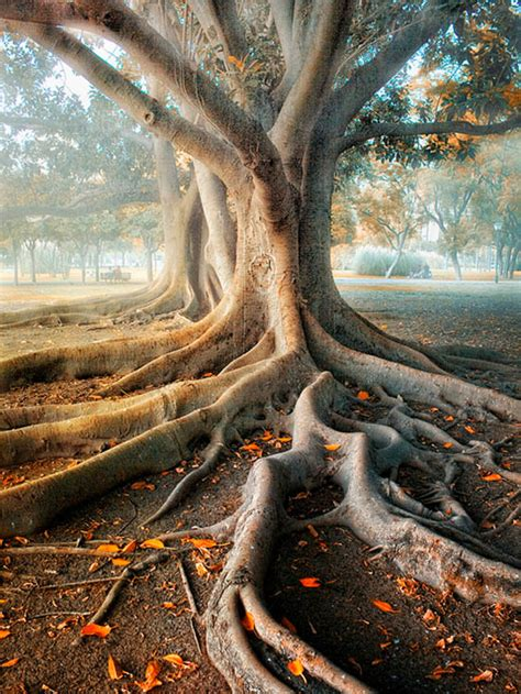 tree photography 25 beautiful exles of tree photography kitaro10
