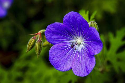 Flowers Violet violet flower april onthemarch co