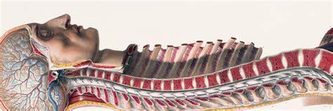 bu bourgery atlas of human jean marc bourgery atlas of human anatomy and surgery
