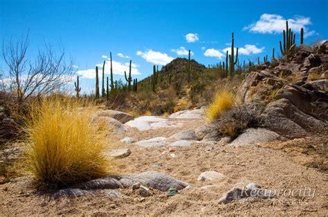 sonoran desert landscape 20070228 0649 reciprocity images