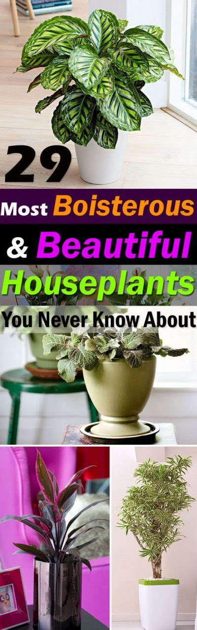 29 Most Beautiful Houseplants You Never Knew About | home gardening viral