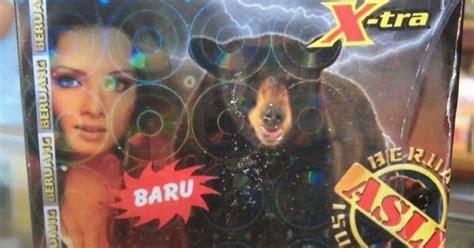 Akar Gingseng Asli Korea Hidup Alkohol cap beruang jamu kuatku