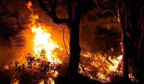 conservation understanding bushfires nsw national parks