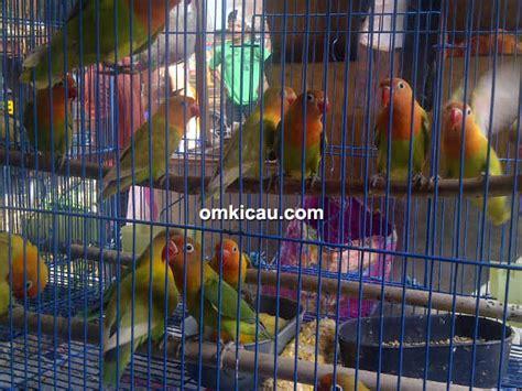 Daftar Harga Pakan Burung Eceran harga kenari dan lovebird di pasar kolong kebayoran lama