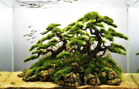 Aquascapes Online Road To International Aquascape Contest 2013 Aquaa3