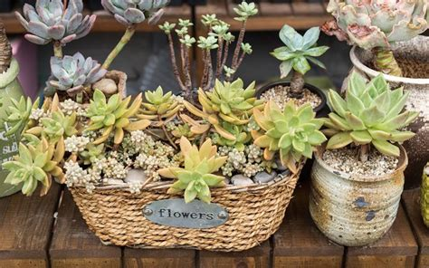 unique planters for succulents 46 best inside greenery and house plants images on