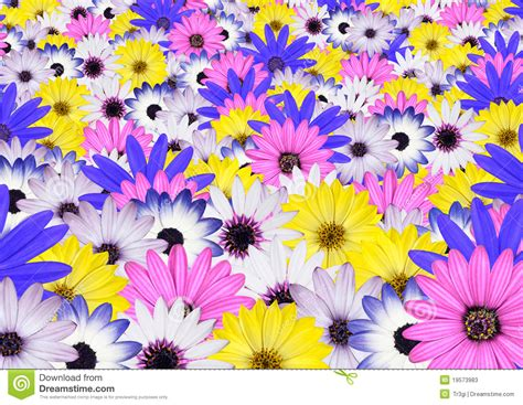 bright colored flowers various bright colored flower background stock