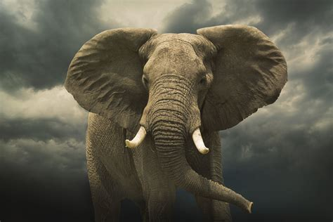 8 Facts On Elephants by 10 Facts About Elephants