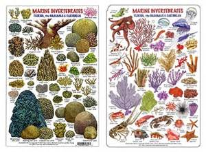 Deep Six in Vero & Stuart Florida: Reef, Olukai sandals, Yeti, Costa