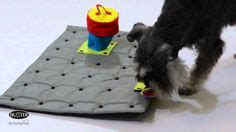 Activities For Blind Dogs 1000 Images About Toys For Blind Amp Vi Dogs On Pinterest