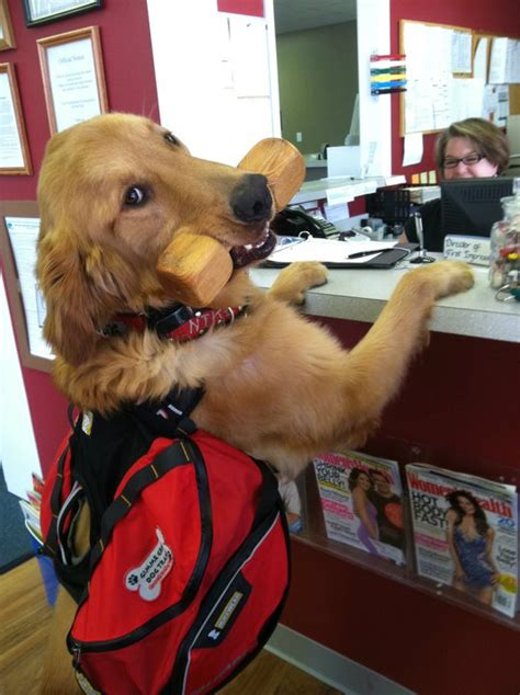 types of service dogs types of service dogs anything pawsableanything pawsable
