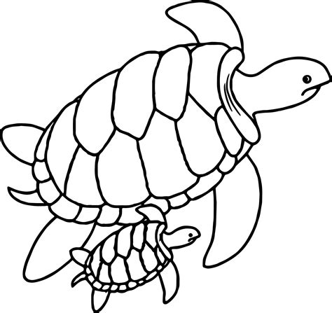 turtles coloring baby turtle pages coloring pages