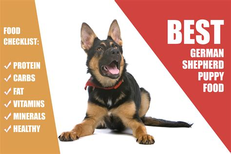 best food for german shepherd puppy what is the best food for your german shepherd puppy mysweetpuppy net