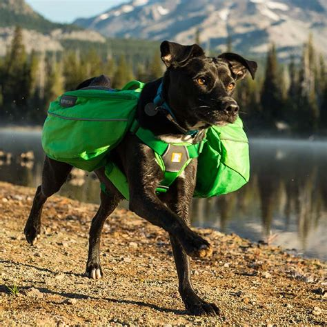 are dogs pack animals approach pack from ruffwear backpack