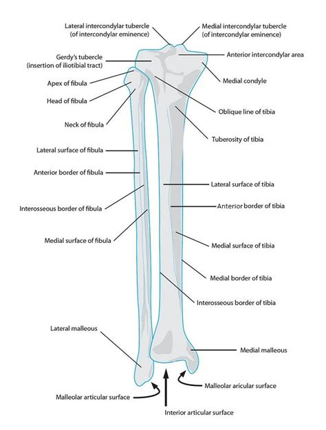 human skeletal system diagram 29 best images about anatomy on my website
