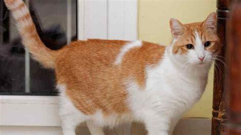 katze pinkelt in die wohnung unsauberkeit bei katzen