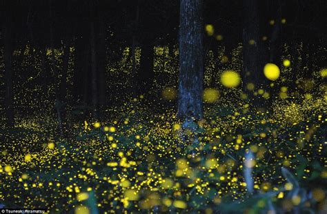 hd pattern firefly lighting up the night stunning time lapse images of