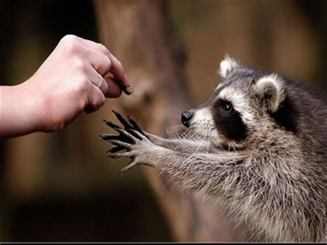 imagenes animales bellos bellos animales animales
