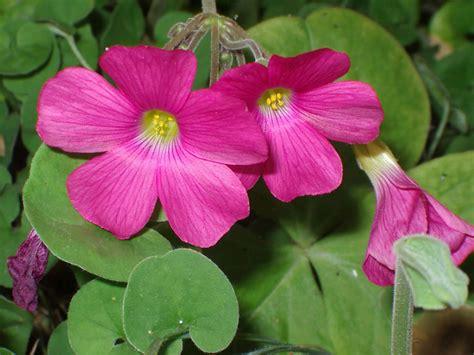 desktop gratis fiori immagini fiori gratis fiori wallpaperart part 3 fiori