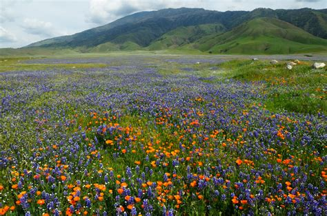 pictures of flowers in southern california gorgeous southern california spring wildflowers landscape