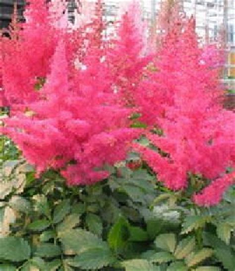 flowering shrubs for afternoon sun 81 best images about afternoon sun plants on