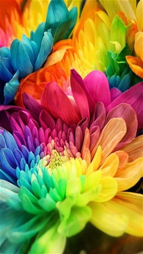wallpaper for mobile colorful flower 360x640 hot wallpapers for phone download 13 360x640