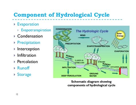 High Heat Plants by Water Cycle And Water Budget