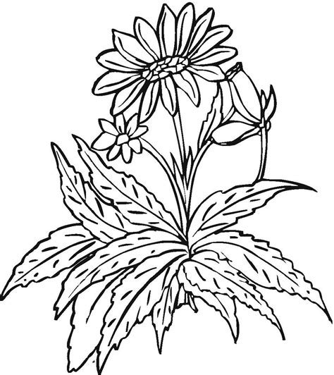 coloring pages field of flowers flower field coloring pages