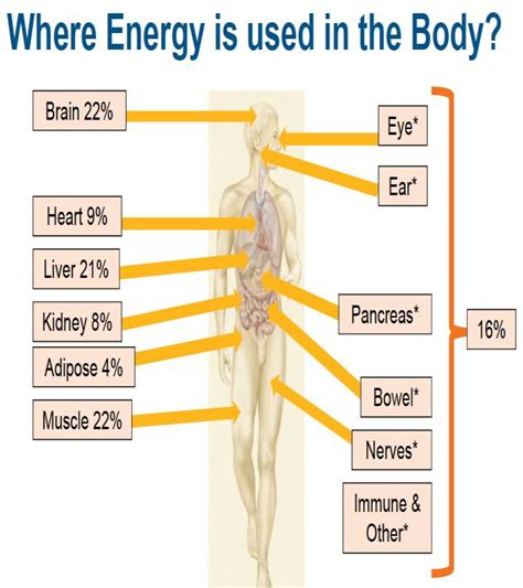 file diagram showing the parts of the body the lymphatic fatigue and vitality saskatoon wellness centre