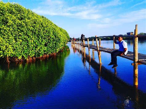 hijau  romantis kata  tepat  hutan mangrove
