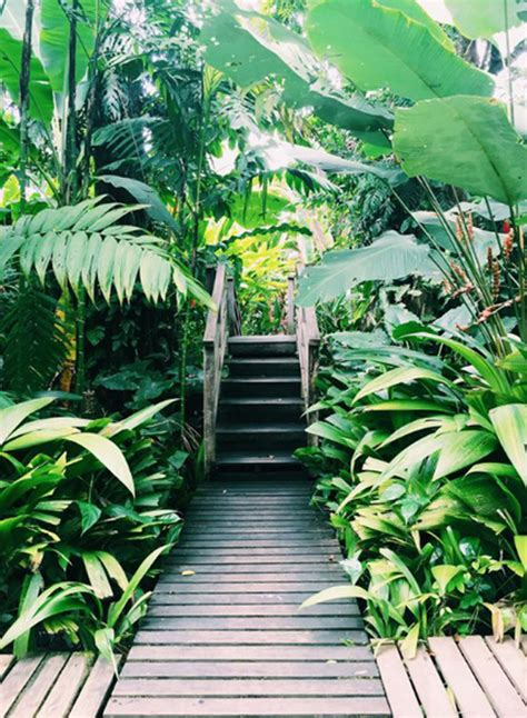 Jungle Backyard by 22 Shady And Fresh Gardens To Jungle Ideas House
