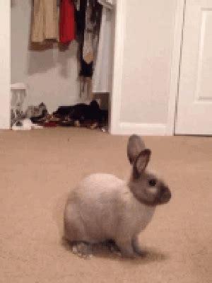 Gantungan Bunny Kopenhagen Bunny 1 bunny gif find on giphy