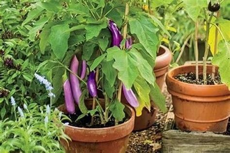 vegetable garden  pots   house  roof top