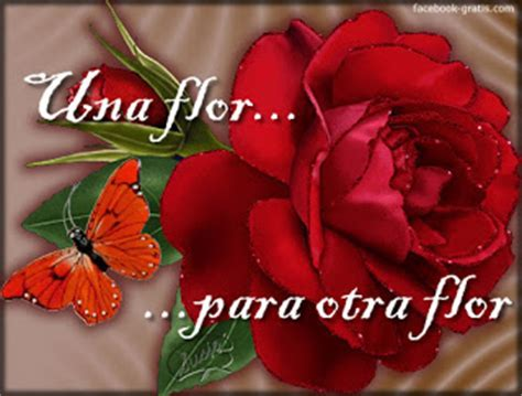 imagenes con frases de amor con flores imagenes y frases facebook frases de amor con flores