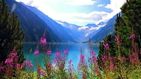 beautiful nature mountain lake flowers  hd wallpaper